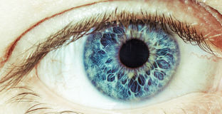 The Blue Eye. Close-up photo of an open blue eye royalty free stock images