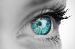 Blue eye on grey face Stock Photography