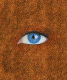 Blue eye over brown texture Royalty Free Stock Image