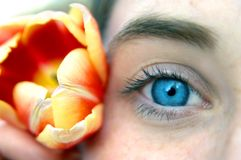 Blue Eye and Tulip Stock Photography