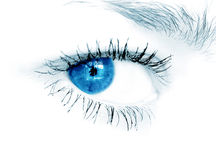 Blue eye on white background Royalty Free Stock Images