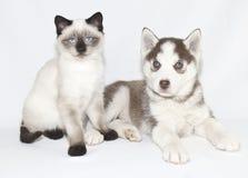 Blue Eyed Babies Royalty Free Stock Photo