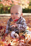 Blue eyed baby playing in autumn leaves Stock Images