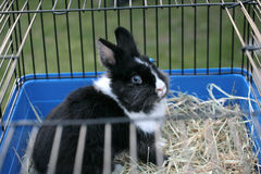 Blue-eyed bunny. In the cage Royalty Free Stock Photography