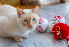 Blue-eyed cat and Christmas balls. Light red blue-eyed cat and Christmas balls hand knitted Royalty Free Stock Photo