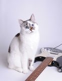 Blue-eyed cat with electric guitar. Blue-eyed cat with black and white electric guitar Stock Photography