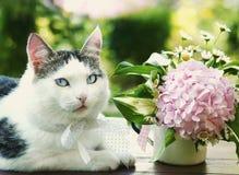 Blue eyed cat with hydrangea flower Stock Image