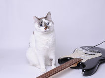 Blue-eyed cat near electric guitar. Blue-eyed cat near black and white electric guitar Stock Photography