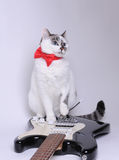 Blue-eyed cat with red bow tie on the electric guitar. Blue-eyed cat with red bow tie on the black and white electric guitar Royalty Free Stock Image
