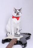 Blue-eyed cat with red bow tie and the electric guitar. Blue-eyed cat with red bow tie and the black and white electric guitar Royalty Free Stock Image