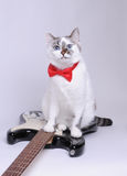 Blue-eyed cat with red bow tie and the electric guitar. Blue-eyed cat with red bow tie and the black and white electric guitar Stock Photo