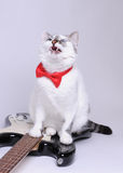 Blue-eyed cat with red bow tie sings and sit on the electric guitar. Blue-eyed cat with red bow tie sings and sit on the black and white electric guitar Stock Image