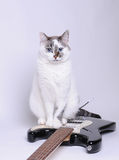 Blue-eyed cat sitting on electric guitar. Blue-eyed cat sitting on black and white electric guitar Royalty Free Stock Image