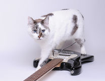 Blue-eyed cat walks on electric guitar. Blue-eyed cat walks on black and white electric guitar Stock Photography