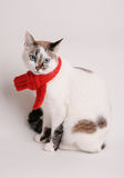 Blue-eyed cat wearing a red knitted scarf on a light background. Blue-eyed white cat in a red knitted scarf on a light background Royalty Free Stock Image
