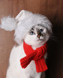Blue-eyed cat wearing a red knitted scarf and santa's hat on a wood background. Blue-eyed white cat in a red knitted scarf on a wooden background Royalty Free Stock Photo
