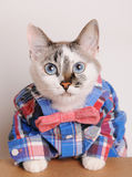 Blue-eyed cat wearing shirt and bow tie. Blue-eyed cat in a plaid shirt and a bow tie Royalty Free Stock Photo