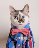 Blue-eyed cat wearing shirt and bow tie. Blue-eyed cat in a plaid shirt and a bow tie Royalty Free Stock Photos