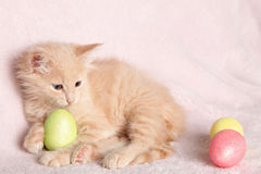 Blue-eyed, cream Easter kitten Royalty Free Stock Photography