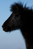Blue-eyed horse Stock Photo