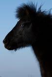 Blue-eyed horse stock photo