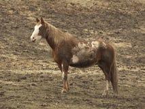 Blue-eyed horse Royalty Free Stock Images