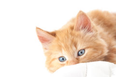 Blue-eyed kitten. Closeup with white text space Stock Photo