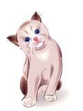 Blue-eyed  little kitten Royalty Free Stock Photo