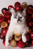 Blue-eyed white cat among Christmas balls. Blue-eyed white cat among red Christmas balls Stock Image