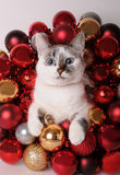 Blue-eyed white cat among Christmas balls. Blue-eyed white cat among red Christmas balls Royalty Free Stock Images