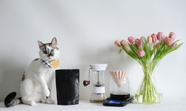 Blue-eyed white cat and brewing coffee in origami dripper. Manual grinder, scale, tulips. Black pack without label. Blue-eyed white charming cat and brewing royalty free stock photography