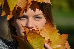 Blue eyes and autumn leaves Stock Image