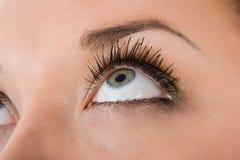 Blue eyes on white Royalty Free Stock Photos