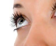 Blue eyes on white Stock Photos