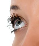 Blue eyes on white Stock Image