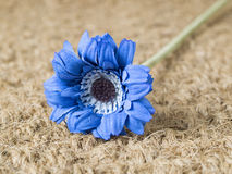 A blue fabric flower Royalty Free Stock Photos