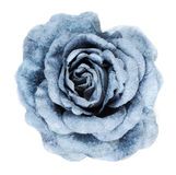 Blue fabrics rose stock photo