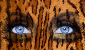 Blue fashion makeup eyes leopard. Abstract blue woman eyes makeup with a leopard jaguar skin texture Stock Photography