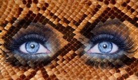 Blue fashion makeup eyes snake skin texture. Animal wildlife metaphor stock images