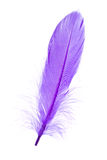 Blue Feather Royalty Free Stock Photos