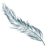 Blue feather. Hand drawn object against white Stock Image