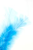 Blue feather. Picture of a bird's feather isolated on white Royalty Free Stock Image