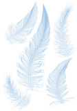 Blue  feather. Set of smooth blue feather Royalty Free Stock Photos