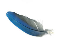 Blue feather stock images