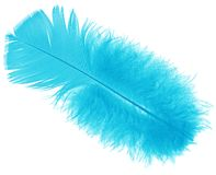 Blue feather. An isolated blue bird feather royalty free stock images