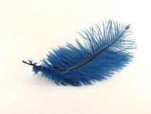 Blue feather. Isolated over white royalty free stock photo