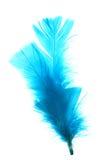 Blue feather. On white background Stock Photos