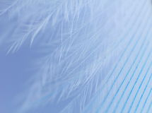 Blue feather close up. Small fragment of Blue feather close up Stock Photography