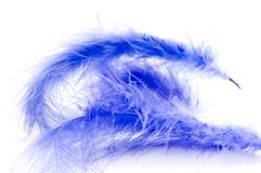Blue feather close up Royalty Free Stock Image