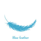 Blue feather falling from the sky. Against white background Stock Images